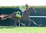 October 5, 2019: Uni (GB), trained by Chard Brown, wins the First Lady Stakes (G1) at Keeneland on October 5, 2019 in Lexington, KY. Jessica Morgan/ESW/CSM