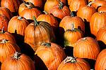 Pumpkins ready for market after harvest.