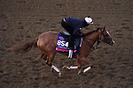 November 4, 2020: Editor At Large, trained by trainer Chad C. Brown, exercises in preparation for the Breeders' Cup Juvenile Fillies Turf at Keeneland Racetrack in Lexington, Kentucky on November 4, 2020. John Voorhees/Eclipse Sportswire/Breeders Cup/CSM