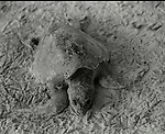 Death of a Turtle