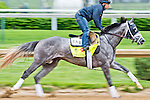 LOUISVILLE, KY - MAY 03: Destin, trained by Todd Pletcher and owned by Twin Creeks Racing Stables, LLC, exercises and prepares during morning workouts for the Kentucky Derby and Kentucky Oaks at Churchill Downs on May 3, 2016 in Louisville, Kentucky. (Photo by Scott Serio/Eclipse Sportswire/Getty Images)