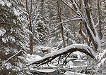 White-tailed deer walking in a winter wonderland.
