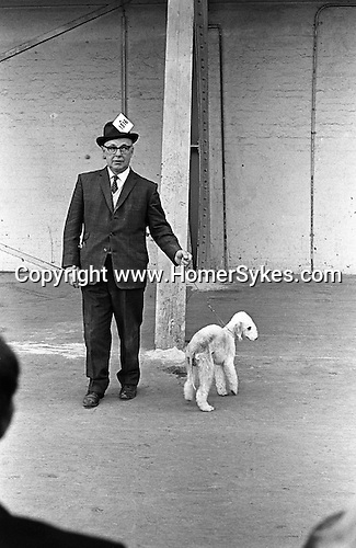 CrufTs Dog Show man showing a Bedlington terrier. Earls Court London 1968