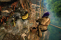 Giants Honey Bees in Nepal