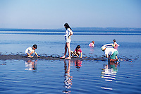 Children playing in Water of Pacific Ocean, Boundary Bay Regional Park, Delta, BC, British Columbia, Canada