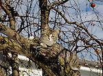 CAT IN A TREE IN PENNSYLVANIA