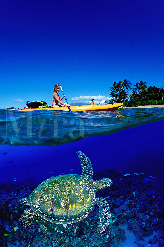 This kayaking couple (MR) were photographed just off the coast of Maui, as was the green sea turtle Chelonia mydas. Digital Composite