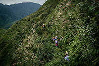 Black cardamom (thao qua) farmers make their way along a steep hillside path as their hike in to the nature reserve to where the fruits grow.