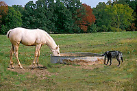 Horse and dog share drink