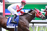 23 April 2011.  Derby Kitten and Julien Leparoux win the Coolmore Lexington Stakes at Keeneland Racecourse.