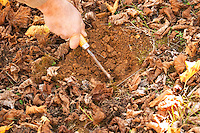 The dog has found a truffle and the man scratches the soil with a tool or a twig to find it Truffiere de la Bergerie (Truffière) truffles farm Ste Foy de Longas Dordogne France