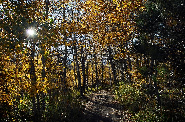Rainbow Trail at Taylor Creek