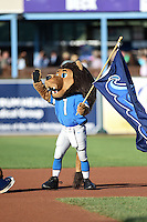West Michigan Whitecaps guest mascot, Roary of the Detroit Lions, before a game against the Great Lakes Loons on June 4, 2014 at Fifth Third Ballpark in Comstock Park, Michigan.  West Michigan defeated Great Lakes 4-1.  (Mike Janes/Four Seam Images)