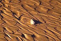 Close up of a cone shell sitting on a Kauai south shore beach