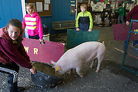 """Camryn Berryhill, 15, a student at White River High School, coaxes her pig towards it's bath by dragging a food bowl at the Northwest Junior Livestock Show at the Washington State Spring Fair in Puyallup, Washington on April 17, 2015. """"I live in a development and being able to do this outside of a city is different. I like it."""" she said."""