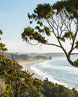 Native forest and Three Mile beach, Westland Tai Poutini National Park, South Westland, West Coast, UNESCO World Heritage Area, New Zealand, NZ