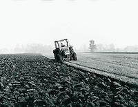 Landwirtschaft in der Wedeler Marsch, Schleswig-Holstein, Deutschland 1978
