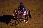 November 5, 2020: Empire Of Gold, trained by trainer Terry Eoff, exercises in preparation for the Breeders' Cup Sprint at Keeneland Racetrack in Lexington, Kentucky on November 5, 2020. John Voorhees/Eclipse Sportswire/Breeders Cup/CSM