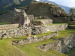 Lamas and terraces at the ruins of Machu Picchu near Cusco, Peru.