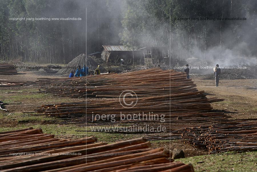 ETHIOPIA, Bahir Dar, eucalyptus forest and charcoal burner / AETHIOPIEN, Bahir Dar, Forst mit Eukalyptus Baeumen und Koehlerei zur Herstellung von Holzkohle