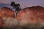 Gum or eucalyptus, Northern Territory, Australia Devil's Marbles Conservation Reserve