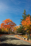 Carriage road in the Autumn, Acadia National Park, Maine