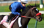 April 21, 2014 Kiss Moon works a bullet 5F in 1:00.60 at Churchill Downs with rider Julien Leparoux.  She is trained by Dave Vance and owned by Carl F. Pollard. She was recently second in the Fantasy Stakes at Oaklawn Park.