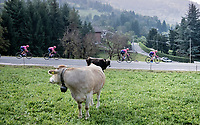 locals witnessing the peloton descending the Colle Gallo (763m)<br /> <br /> 113th Il Lombardia 2019 (1.UWT)<br /> 1 day race from Bergamo to Como (ITA/243km)<br /> <br /> ©kramon