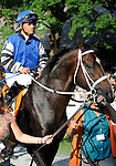 09 August 15: Telling (no. 7), ridden by Javier Castellano and trained by Steve Hobby, wins the 35th running of the grade 1 Sword Dancer Invitational for three year olds and upward at Saratoga Race Track in Saratoga Springs, New York.