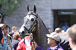 Paddy O'Prado schools for the Bluegrass Stakes in the Keeneland paddock. 04.08.2010