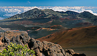 The HALEAKALA NATIONAL PARK on Maui in Hawaii is known as a rugged arid wilderness which does not encourage many living plants besides this Kupaoa
