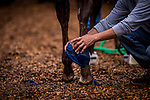 BALTIMORE, MD - MAY 17:  Justify gets a bath at Pimlico Racecourse on May 17, 2018 in Baltimore, Maryland. (Photo by Alex Evers/Eclipse Sportswire/Getty Images)