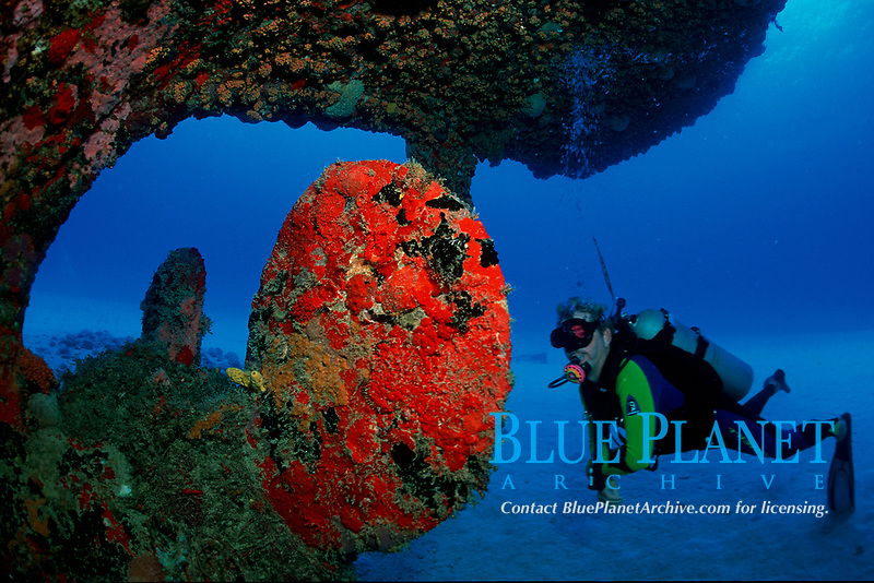 scuba diver explores wreck of the Suffolk Maid, a 144 fott fishing trawler at a depth of 70 feet, Fredericksted, St. Croix, U.S. Virgin Islands (USVI or U.S.V.I.) West Indies (Caribbean Sea), AtlanticOcean