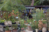 Nursery entrance, Australian Native Plant Nursery, Ventura, California