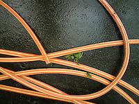 Orange and yellow gardening hose, settling on a wet ground.
