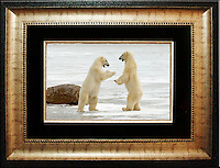 """Polar Bear<br /> Image Size:  10"""" x 15""""<br /> Finished Frame Dimensions:  21"""" x 26""""<br /> Quantity Available: 1"""
