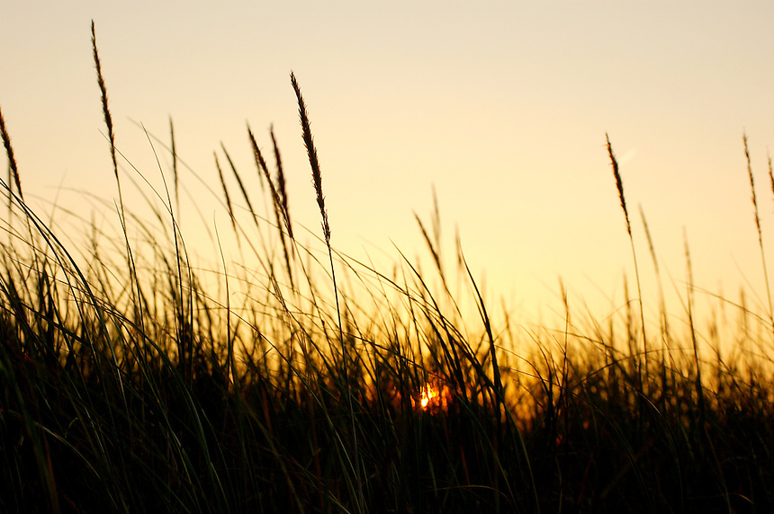 A summer sunset seen through beach grass on the shoreline of Lake Superior
