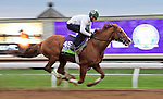 October 26, 2015 :  Lea, trained by William I. Mott and owned by Claiborne Farm & Adele Dilschneider, exercises in preparation for the Breeders' Cup Mile at Keeneland Race Track in Lexington, Kentucky on October 26, 2015. Scott Serio/ESW/CSM