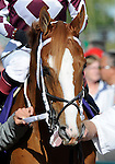 09 September 20: Solitaire prior to the grade 1 Northern Dancer Turf Stakes for three year olds and upward at Woodbine Racetrack in Rexdale, Ontario.