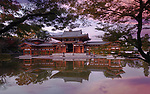 Beautiful sunrise scenery of Byodo-in temple Amida Phoenix hall reflecting in the clear water of the Pure Land garden pond visible through branches of Japanese maple trees. Byodoin, Uji, Kyoto Prefecture, Japan 2017 Image © MaximImages, License at https://www.maximimages.com