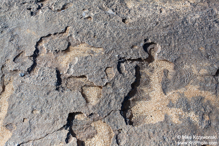 Hawaiian petroglyphs on sandstone along the shore of Keiki Beach, North Shore, Oahu, Hawaii (normally covered by sand)