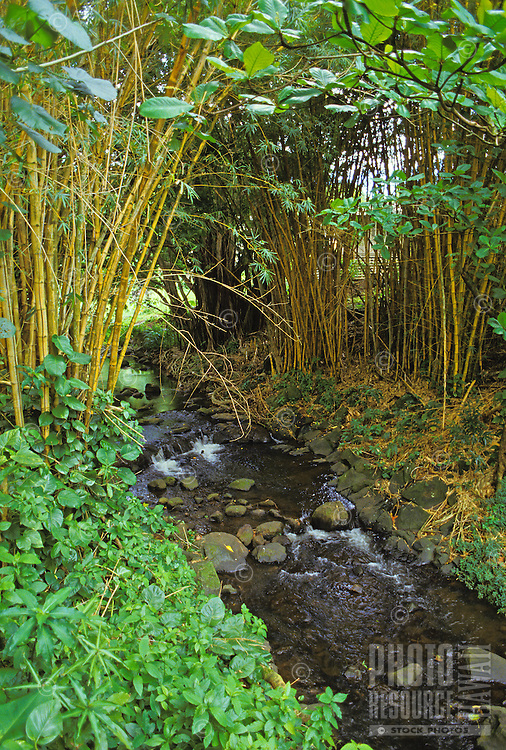 Nuuanu stream off the old pali road