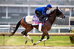 November 1, 2018: La Pelosa (IRE), trained by Charlie Appleby, exercises in preparation for the Breeders' Cup Juvenile Fillies Turf at Churchill Downs on November 1, 2018 in Louisville, Kentucky. Alex Evers/Eclipse Sportswire/CSM