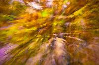Autumn leaves seem to fly toward the lens.