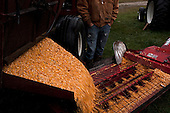 Wataga, Illinois<br /> October 13, 2014<br /> <br /> Harvesting corn on the O'Connor family farm owned and run by Tom O'Connor. The farm has been in the family for several generations. He grows GMO corn and raises cattle. In 2014 he had his best harvest ever bringing in 200 to 220 bushels an acres.