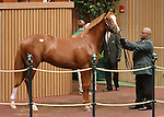 September 08, 2014:Hip #172 Tapit - Queen Joanne colt consigned by Woodford Thoroughbreds sold for $500,000 to Shadwell Farm at the Keeneland September Yearling Sale.  Candice Chavez/ESW/CSM