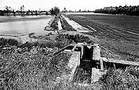Risaie e canale d'irrigazione presso Abbiategrasso nel Parco agricolo Sud Milano --- Ricefields and irrigation canal near Abbiategrasso in the Rural Park South Milan