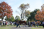 October 23, 2015: Beholder schooling in the paddock, trained by Richard Mandella, and owned by B. Wayne Hughes, cross entered in the Breeder's Cup Classic Grade 1 $5,000,000, and the Breeder's Cup Distaff $2,000,000. Samantha Bussanich/ESW/Cal Sport Media