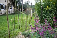 Wildbienen-Nisthilfe aus markhaltigen Stängel, Stängel, Pflanzenstängel, Pflanzenstängeln, Stengel wie zum Beispiel Himbeere, Holunder, Beifuß. Die etwa 50-100 cm langen, markhaltigen Stängel werden senkrecht an 2 Schnüre gebunden, die zwischen zwei Pflöcken gespannt sind. Wildbienen-Nisthilfen, Wildbienen-Nisthilfe selbermachen, selber machen, Wildbienenhotel, Insektenhotel, Wildbienen-Hotel, Insekten-Hotel