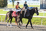 NEW ORLEANS, LA - FEBRUARY 25: Girvin #1, ridden by Brian Joseph Hernandez, Jr,  Risen Star Stakes race on Risen Star Stakes Day at Fair Grounds Race Course on February 25, 2017 in New Orleans, Louisiana. (Photo by Jarrod Monaret/Eclipse Sportswire/Getty Images)